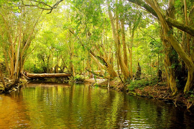 Cairns 4WD Waterfall and Rainforest Tour Including Kuranda Scenic Railway, Cairns y el Norte Tropical, AUSTRALIA