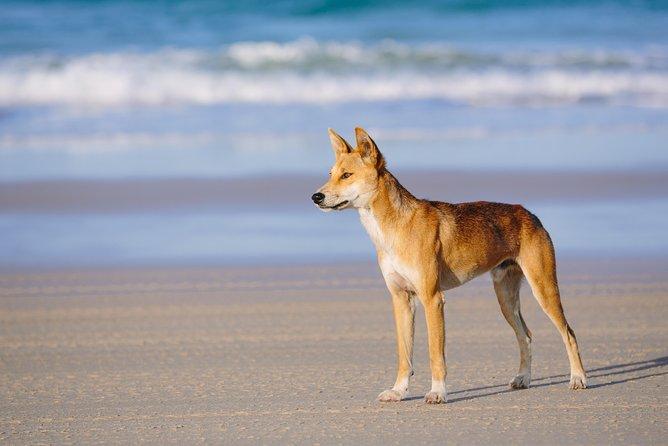 MAIS FOTOS, Fraser Island 4WD Tour from Rainbow Beach