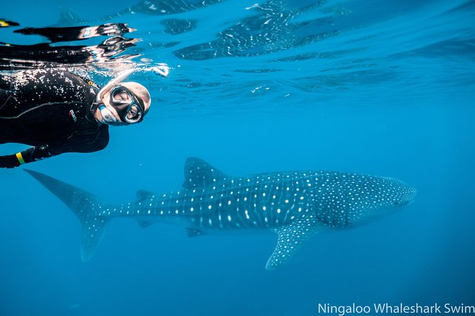 SPECIAL OFFER : Escape the cold and swim with a whaleshark in winter. AND get your summer tour FOR FREE - an undersea helmet walk beneath the iconic Busselton Jetty (usually $179) or SCUBA dive!<br><br>Come experience wonder up very close & personal swimming next to the biggest shark in the world, the Whale Shark. <br><br>Join the only whaleshark tour to have ever won the prestigious Gold Medal for Best Adventure Tour in Western Australia for a wonder-filled day cruising and diving the World Heritage-listed Ningaloo Reef. <br><br>Its a breathtaking experience. Finding you a whale shark to swim with, or putting you face to face with a humpback whale, are things we are expert at. There is so much more out there that we want to share with you that makes the Ningaloo so special! Blue whales, manta rays, dolphins, dugongs, turtles, spectacular corals, all shapes and sizes of fish… and so much more both massive and minute!<br><br>Come join us for what we aim to make one of the best tours you have ever been on!
