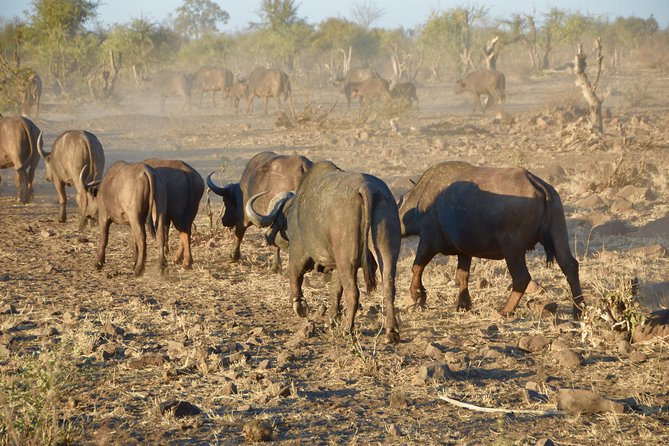 3 Days Guided Kruger Park Safari from Johannesburg, Johannesburgo, South Africa