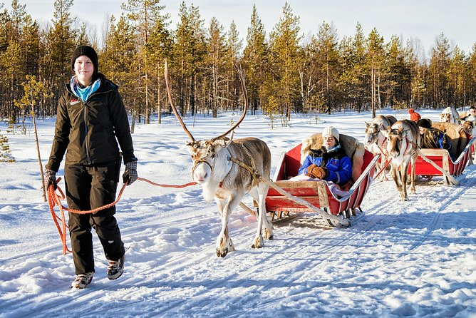 Reindeer herding is among the oldest professions held by the native people of Lapland and much of their way of life perseveres today. The best way to meet the locals in Lapland is to meet a reindeer—they outnumber the humans! Reindeer have been the staple animal in Lapland for thousands of years, a primary means of transportation, milk, and meat. Reindeer herding began with the nomadic indigenous people of Lapland, the Sami, who lived in reindeer herding communities. Finnish settlers later learned the practice and it remains as central point of local culture. Our guests have the chance to meet the reindeer farmers themselves. Kids (and grown-ups) will enjoy the chance to feed the reindeer some tasty lichen, their favorite treat. Indoors you can enjoy something hot to drink and Finnish pulla (buns).<br>For photograph enthusiasts, there are many ideal photo opportunities. <br>After meeting and greeting the reindeer we'll embark on a pleasant sleigh ride through the amazing landscape.