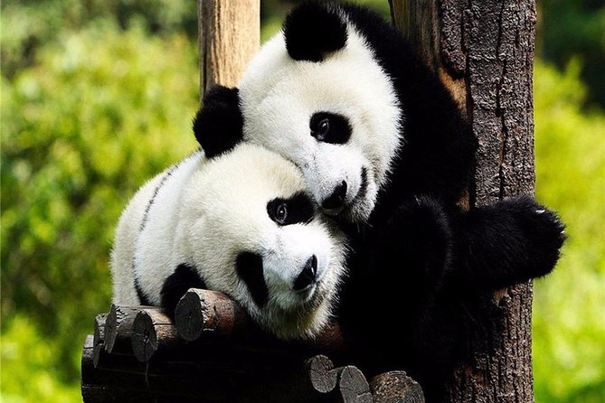 Chengdu in One Day from Jinan by Air: Leshan Giant Buddha, Pandas and More, Jinan, CHINA