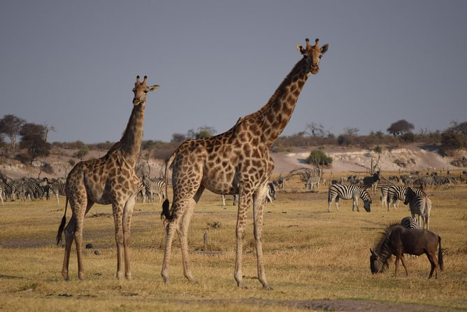 This a safari where you get to experience the zebra and wildbeest migration combining with the semi-desert experience.