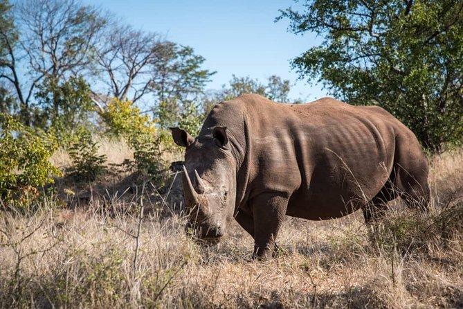 Game Drive and Rhino Walk, Livingstone, Zimbabwe