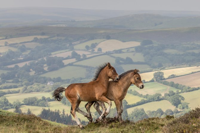 Join Malcolm for an intensive one day Dartmoor Pony & Foal horse photography workshop.<br><br>Against the stunning backdrop of Dartmoor with its abundance of natural beauty and visual opportunities it offers.<br><br>Malcolm's Dartmoor horse photography workshop gives you the chance to explore the horse world of this breathtaking landscape when the foliage and scenery are at its most stunning, taking photographs of Dartmoor ponies & foals in their native moorland environment.<br><br>We'll go close to the herds capturing the characters of the ponies with the distinct Dartmoor landscape as the backdrop.