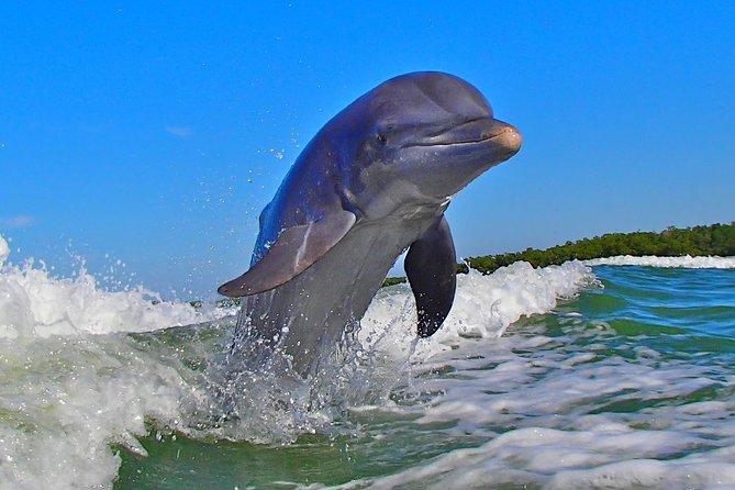 Avi's Premium Dolphin Tour by Jet Ski, Naples, FL, ESTADOS UNIDOS
