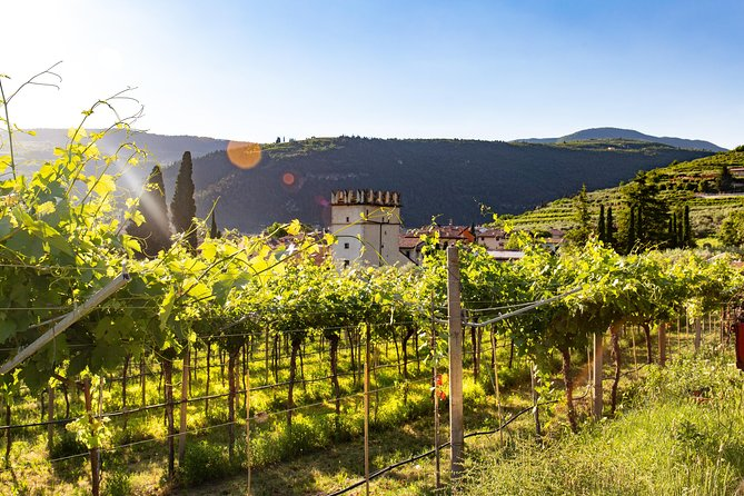 The Valpolicella road from Vine to Wine, Vicenza, Itália