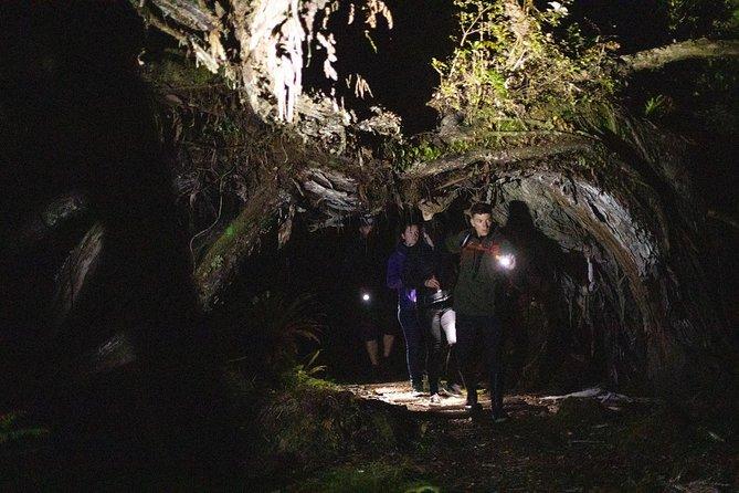 MÁS FOTOS, Stewart Island Wild Kiwi Encounter