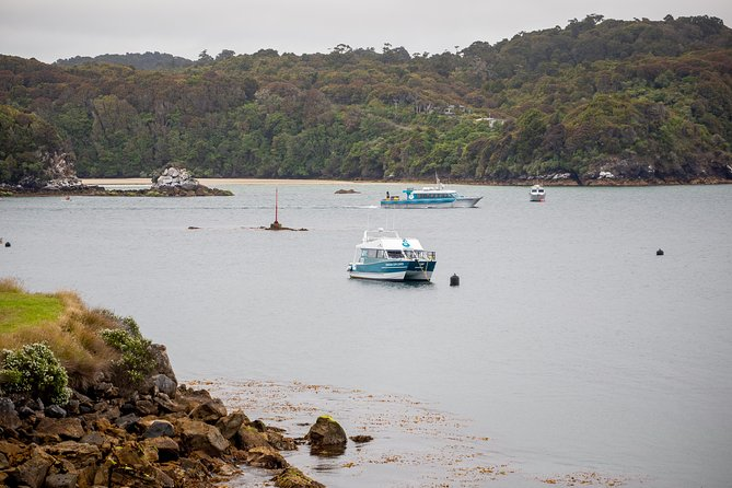 One-Way Ferry from Stewart Island to Bluff, Stewart Island, NUEVA ZELANDIA