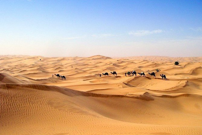 The Desert Oasis & Hot Water Spring Excursion, Yerba, TUNEZ