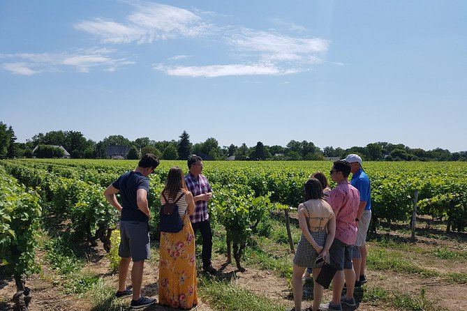 Explore the beautiful Loire Valley vineyards of the Vouvray Appellation. Visit two superb estates, meet the producers and learn how to taste these elegant wines from this well-known terroir of the Loire Valley area. Don't forget to enjoy stunning views on the Loire river !