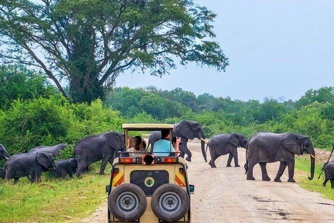Overnight Private Yala Safari with Luxury Tented Camping., Parque Nacional Yala, SRI LANKA