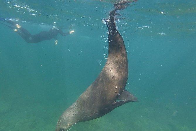 Kangaroo Island Ocean Safari - Snorkeling Safari, Isla Kangaroo, AUSTRALIA