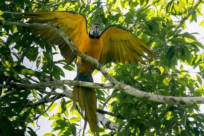 Private Amazing Amazon Discovery Tour - 6 Days, Iquitos, Peru, Iquitos, PERU