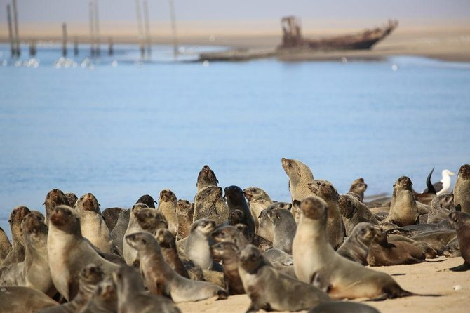 Beautiful Landscapes & Landmarks 8 hour tour, Walvis Bay, NAMIBIA