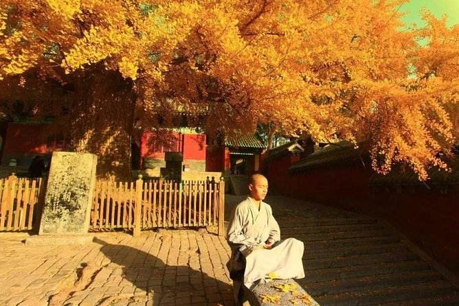 MÁS FOTOS, 2-Day Private Tour from Qingdao with Hotel: Shaolin Temple and Longmen Grottoes