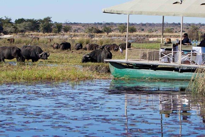 chobe Day trip, Livingstone, ZIMBABUE