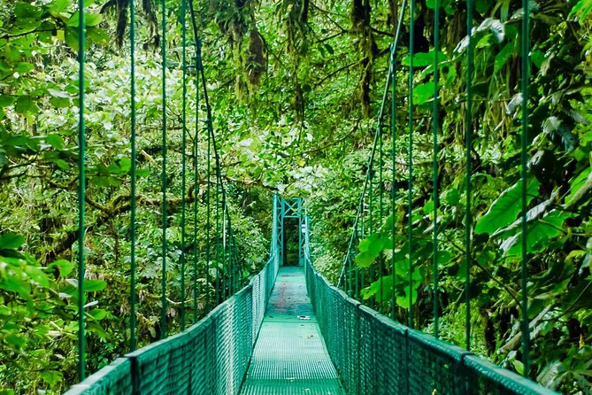 Walk through the Monteverde Cloud Forest canopy via multiple hanging bridges and observe the majesty of nature over the course of a peaceful hike.