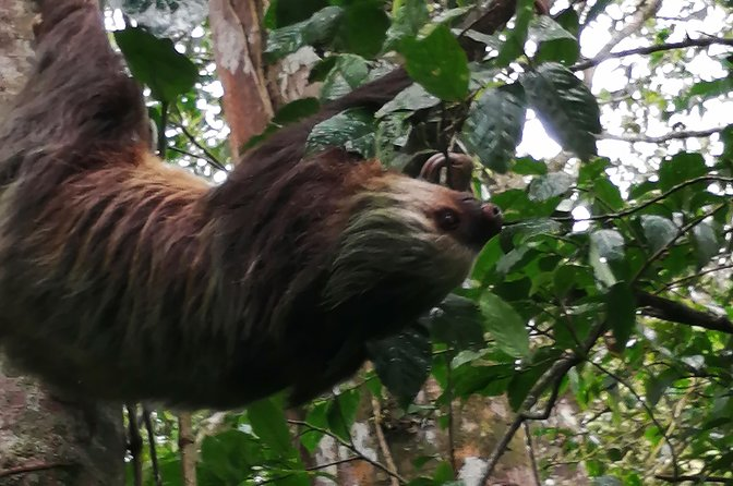 Floating, sloths and Costa Rican Fauna, Liberia, COSTA RICA