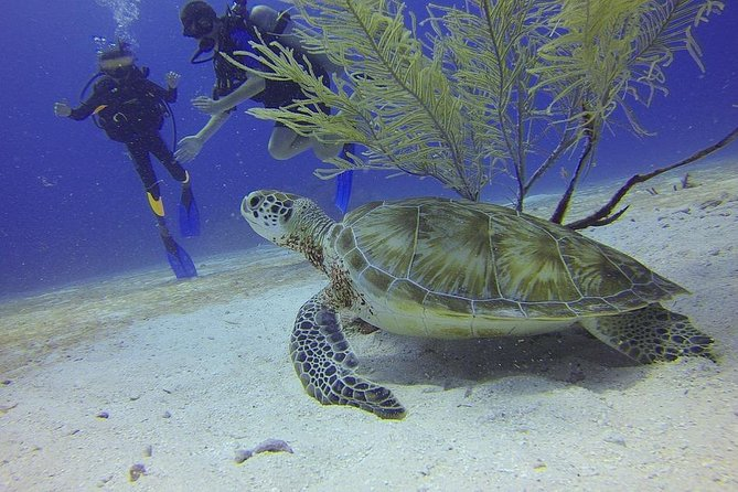 Certified 2-Tank Scuba Diving Tour from Montego Bay, , JAMAICA