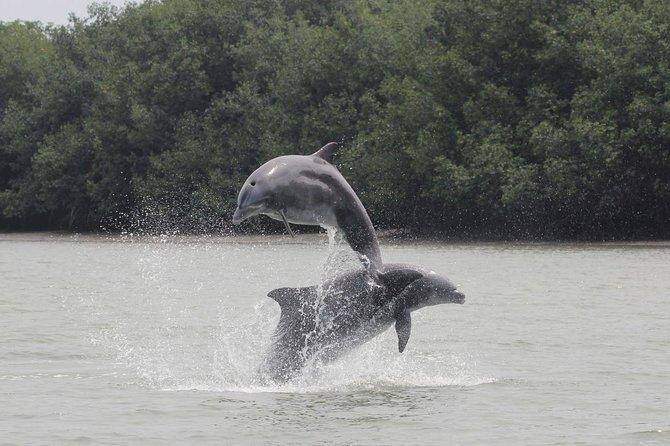 Avistamiento de delfines en Puerto El Morro desde Guayaquil, Guayaquil, ECUADOR