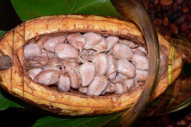 Escapada de un día a una granja de cacao desde Guayaquil, Guayaquil, ECUADOR