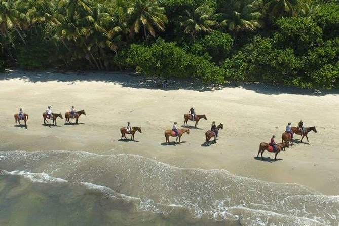 Mid-Morning Beach Horse Ride in Cape Tribulation with Pick Up, Cape Tribulation, AUSTRALIA