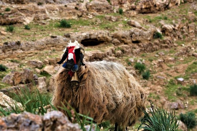 MÁS FOTOS, Learn How to herd sheep in Madaba