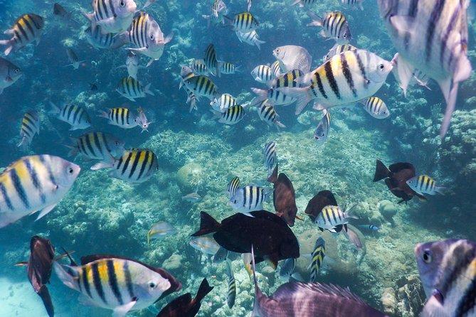 Snorkeling, Roatan, HONDURAS