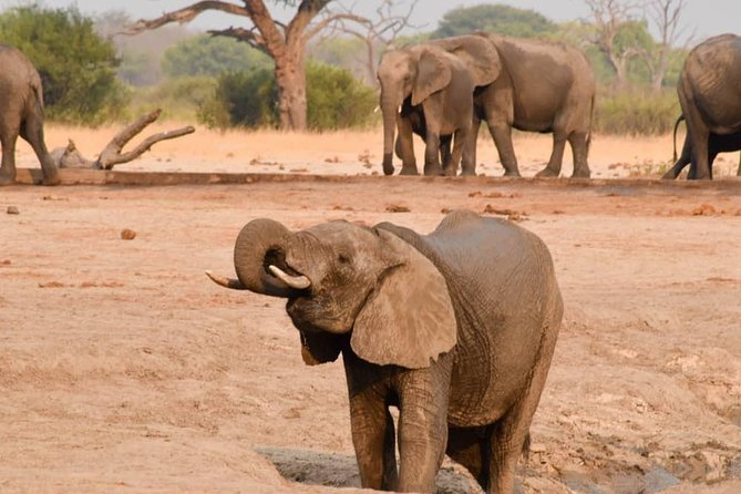 MÁS FOTOS, Wildlife and nature, Victoria Falls, Hwange, Chobe day trip 6 nights.
