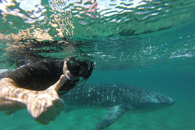MORE PHOTOS, Whale Shark snorkeling at La Paz guided by a local marine biologist