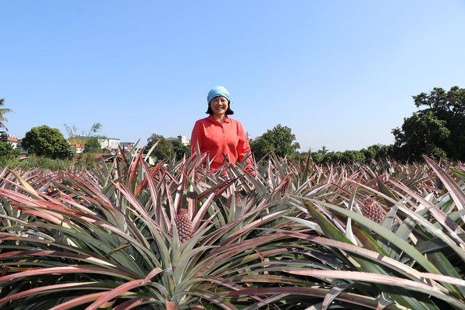Taiwan's Ultimate Pineapple Day Tour in Kaohsiung, Kaohsiung, TAIWAN