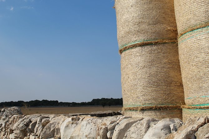 Cheese factory tour with Apulian delicacies tasting, Brindisi, ITALIA