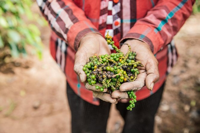 Pepper production is currently re-surging as top chefs around the world have rediscovered the uniqueness of Kampot Pepper. As one of the main agricultural products this region has to offer, a visit to a pepper farm is high on many people's lists. Pepper farms are dotted throughout Kep and Kampot and we can include several other sights in this tour. Please indicate to our consultant what your interests are and we can help you pick the right farm for you to visit and build a trip around it.