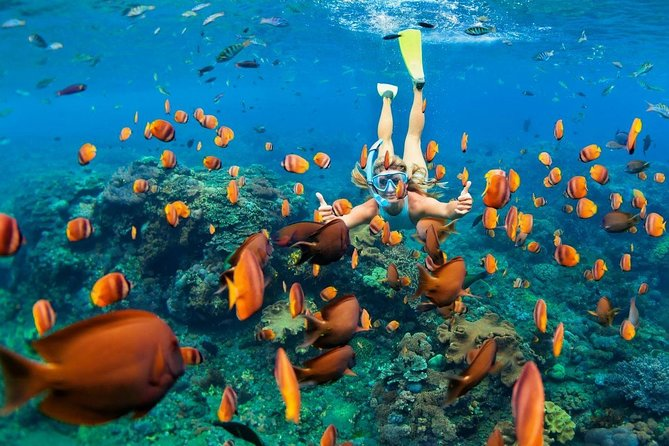 Want to see the beauty of the underwater world of Bali's Blue Lagoon and experience the incredible joy of riding on a jungle swing within the tropical jungle? This is all-inclusive tour .<br>During this tour you will:<br>- Doing snorkeling at the Blue Lagoon - one of the best snorkeling spots in Bali (Include lunch, equipment,instructor,private boat and transportation)<br>- Try various delicious types of local coffee and tea<br>- Experience the joy of riding on a Jungle Swing <br>- Visit beautiful rice paddies Tegalalang - the landmark of Ubud<br><br>Let's explore Bali!<br><br>P.S. Travel more and get FREE transfer to the airport! <br>Book 3 tours with BaliHit and get FREE private transfer to the airport (Seminyak, Kuta, Jimbaran, Nusa Dua area).