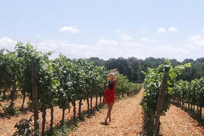 MÁS FOTOS, Locorotondo tour and wine tasting