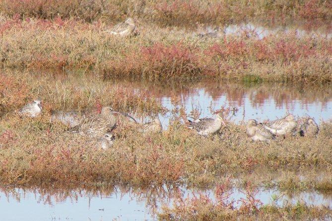 Observação de aves na Ria de Alvor, Lagos, PORTUGAL