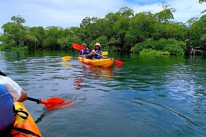 """The chirping of birds during your journey along with a very nice view makes it one among the best kayak tours in India. There is one thing that we can promise is that after your experience here in the islands, you will forever fall in love with Kayaking. Paddle along and enjoy the stunning view of the tropical forests and revel in the beauty of nature on this meditative kayaking tour. In the night kayak trip, the event of bio-luminescence is an added attraction, provided it's a full moon night. This is also a very rare event and is subject to availability as per natural occurrences. """"We do not promise you for this sight"""". Of all the natural wonders of the world, bio-luminescence is one of the most stunning. This unearthly blue-tinted glow is caused by phytoplankton."""