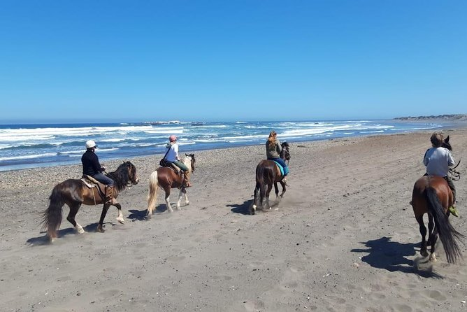 "Experience an enjoyable 3-hour horseback ride on the beach and sand dunes in Concon before exploring the nearby sand dunes with amazing views of the Pacific Ocean and Andes Mountains. Then visit Chile's ""Garden City"" of Viña del Mar!"
