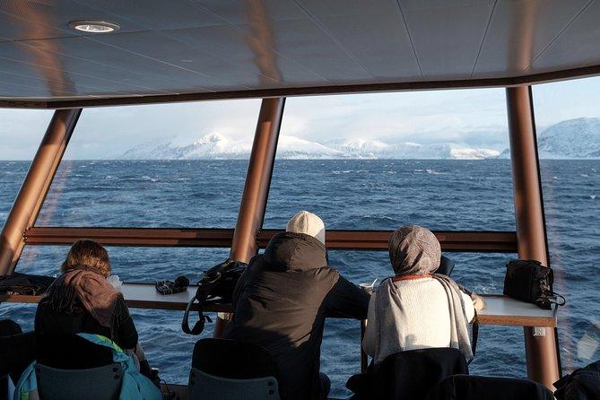 Tromso Fjord & Wildlife Cruise, Tromso, NORUEGA
