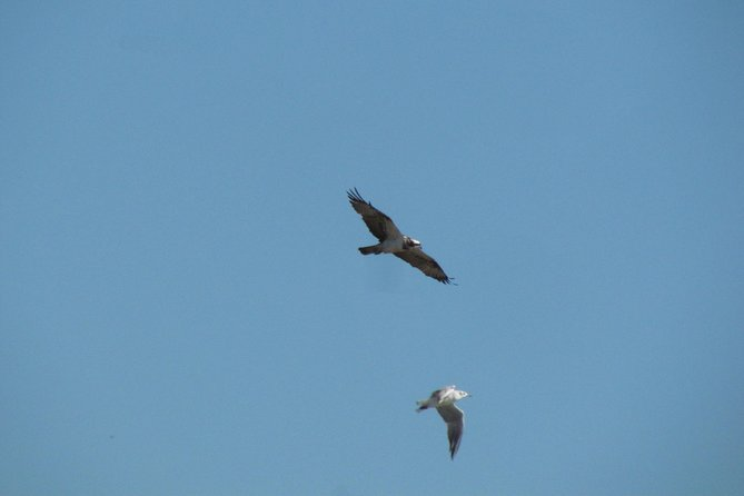 Tarde de observação de aves na Lagoa dos Salgados, Lagos, PORTUGAL
