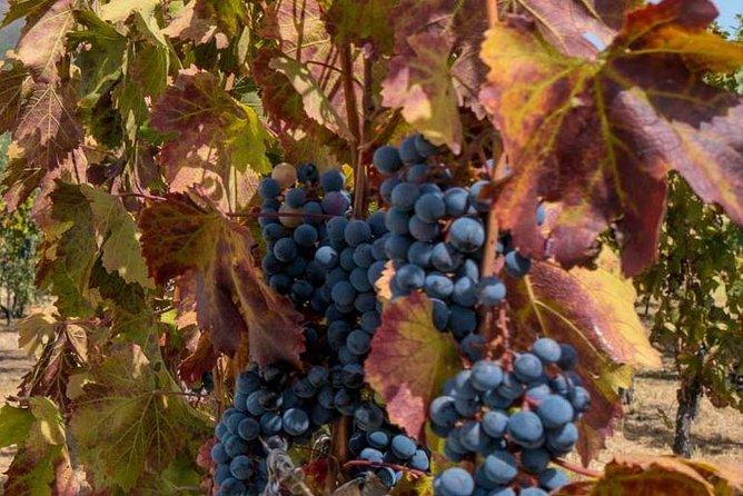 Assisi and Perugia with Lunch&WineTasting ShoreExcursion from Civitavecchia Port, Lago Bracciano, ITALIA