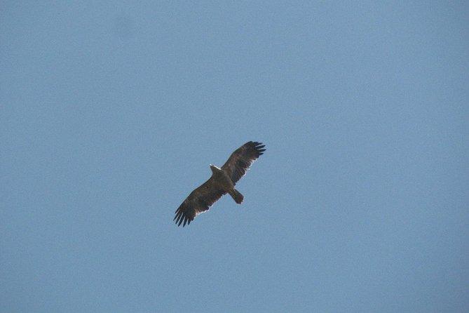 Dia de observação de aves a volta de Castro Verde., Lagos, PORTUGAL