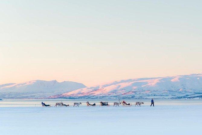 Reindeer Experience, Sami Culture, and Short Reindeer Sledding Tour from Tromso, Tromso, NORUEGA