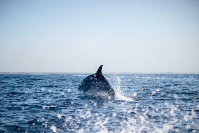 Observação de Golfinhos, Distrito de Setúbal, PORTUGAL