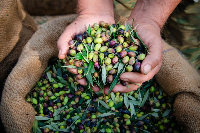 Extra Virgin Olive Oil Tour with Lunch in Umbria, Assisi, ITALIA