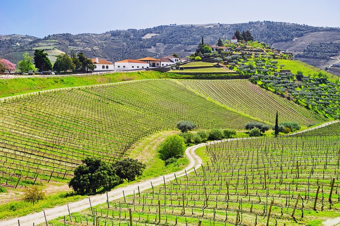 Douro Valley Tour: Wine Tasting, River Cruise and Lunch From PORTO - Pickup free, Oporto, PORTUGAL