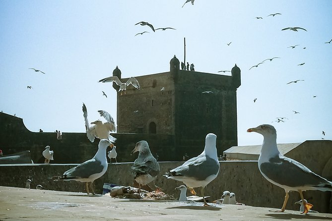 MÁS FOTOS, Essaouira - Day Trip from Marrakech - shared/small group (8 pers)