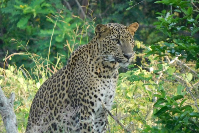 Yala National Park 5 hour Safari Tour - 2 Sessions, Parque Nacional Yala, SRI LANKA