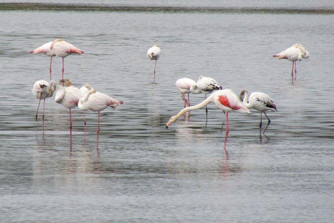 Dia de observação de aves no parque natural da Ria Formosa, Lagos, PORTUGAL